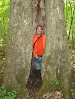 California Is Not The Only Place That Has Giant Trees This Huge Red Oak A Hollow Center Enough For Forester Danny Hamsley To Stand Inside
